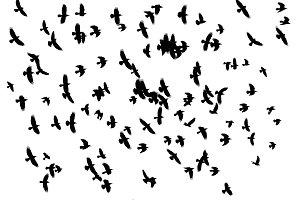 Odin birds flying across the sky, a