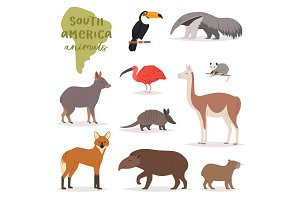 Animal in South America vector wild
