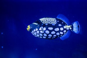 Aquarium Fish. Underwater Stones and