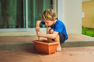 Little cute boy sows seeds in a