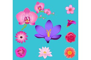 Flowers Collection Isolated on Azure