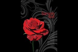 Beautiful red rose, vector illustrat