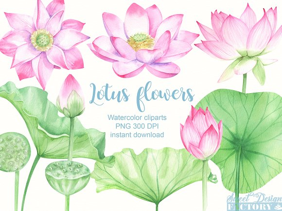 Watercolor Lotus Clipart Illustrations Creative Market