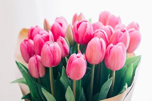 bouquet of pink tulips on a white