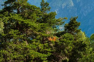 Summer Alps mountain, Switzerland