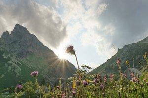 Sunset over the flower in Dolomites