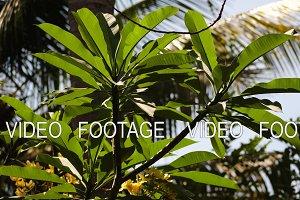 tropical vegetation in indonesia
