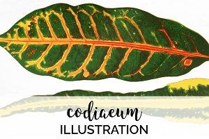 Vintage Leaf Codiaeum Leaves