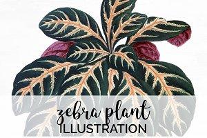 Zebra Plant Green Vintage Leaves