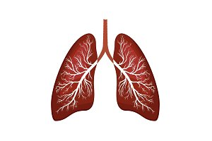 Lungs icon illustration