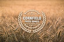 Cornfield Photo Bundle