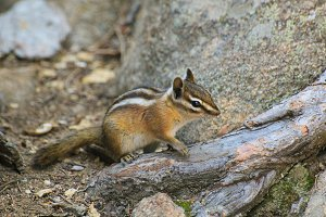 3 Hi-Res Photos Squirrels/Chipmunks