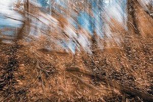 Avalon Phantom Forest