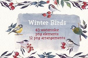 Winter birds watercolor clipart