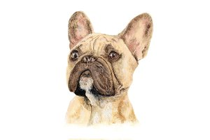 French Bulldog Oil Painting Clipart