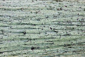Natural old wood mossy background