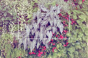 Tropical plants Wall