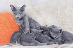 Сareful mother cat one month kittens