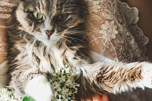 Sweet kitten and beautiful sprig of
