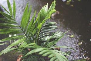 NATURE IN RAIN