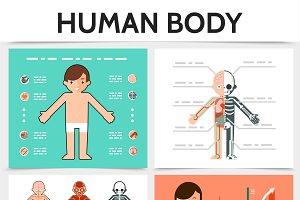 Flat human anatomy concept
