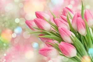 Pink tulip flowers Spring nature bac
