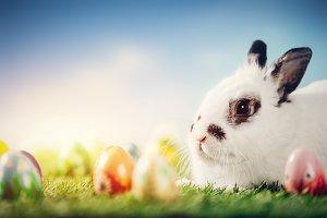 White rabbit and Easter eggs on spri