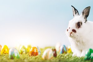White bunny and eggs on spring backg