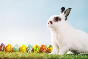 White rabbit and eggs on spring back