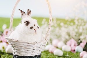 White rabbit sitting in Easter baske
