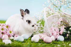 Bunny and Easter decorations on spri