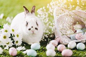 Rabbit sitting next to Easter decora