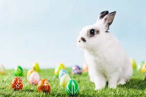 White bunny and Easter eggs on sprin