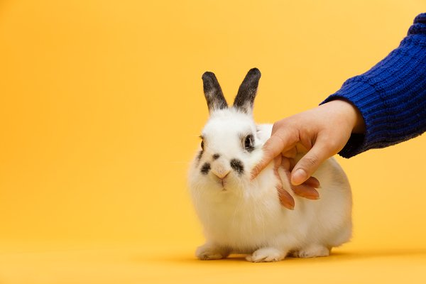 Woman's hand petting white bunny.