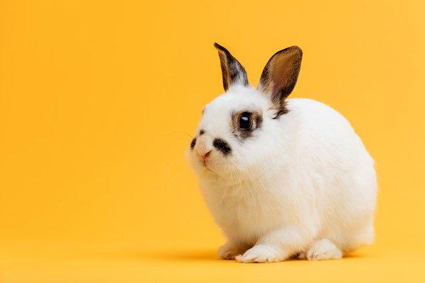 Little bunny sitting on yellow back…