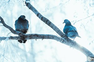 Pigeons Sitting Hunched On A Branch Animal Photos Creative Market