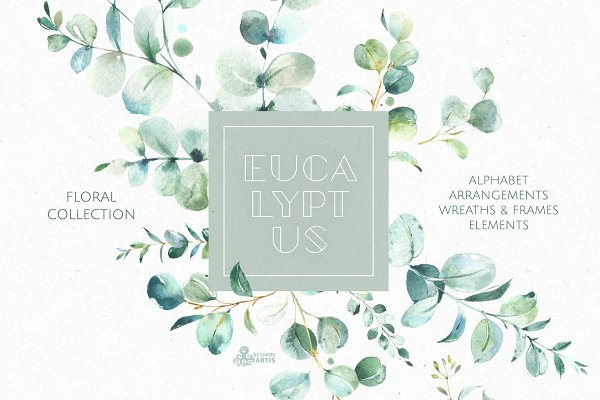 Eucalyptus. Watercolor Collection