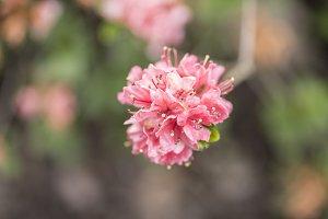 Pink flower macro detail