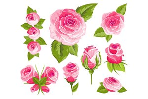 Vintage flowers set. Pink roses and