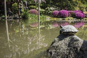 Turtle sun bathing on a rock