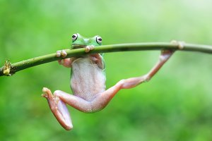 dumpy frogs on branches