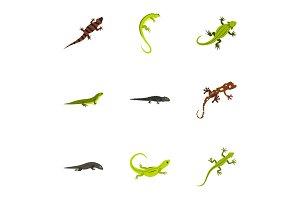 Iguana icons set, flat style