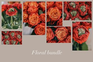 Orange and red roses photo bundle