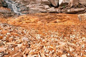 Avalon Gold Stream