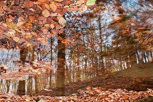 Avalon Fall Reflections