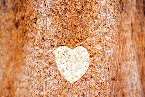 Heart drawn on the trunk of a tree