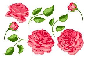 Set of red roses. Beautiful