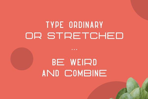 Best Hippo Sans Serif   3 styles Vector