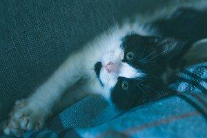 Cute kitten having rest on sofa