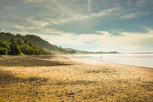 Beach, ocean and rain forest